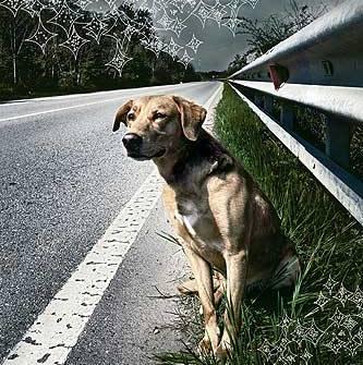 5-cani-abbandonati