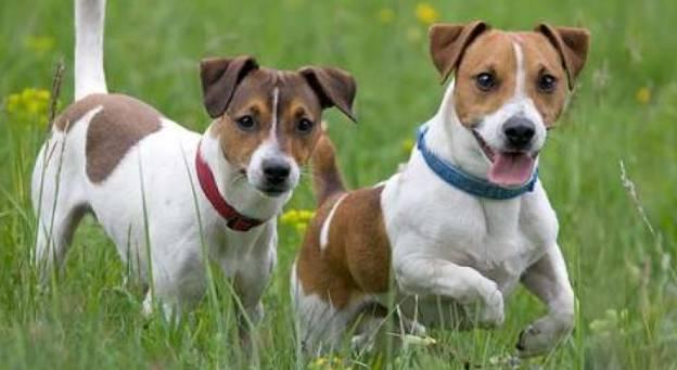 cane taglia piccola